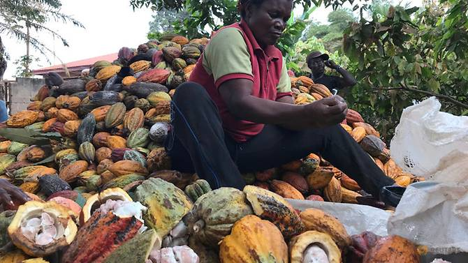 Cameroon's cocoa production decreases