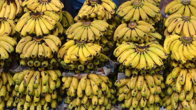 Banana disease behind Mozambique job losses