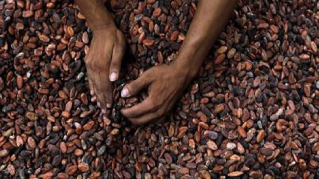 Southern Cameroons crisis hits palm oil, cocoa production
