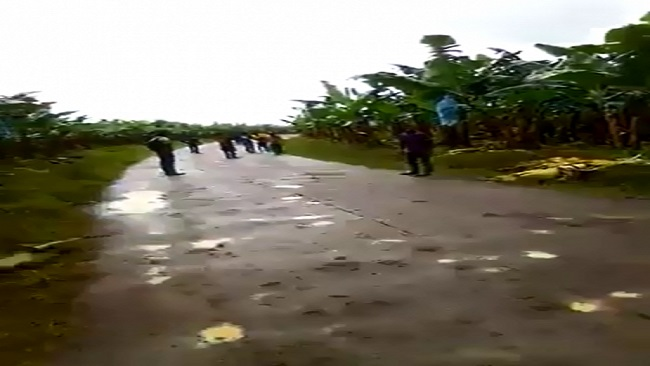 Workers attacked with machetes on Cameroon banana plantation