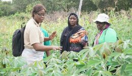 Rural Female Farmers Contribute More To Local Economy In Cameroon