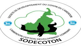 CPDM Crime Syndicate merges Sodecoton & Cicam to boost textiles