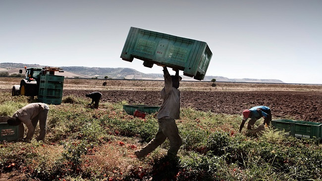 Migrant farmworkers in Italy working with no protection amid Covid-19 outbreak