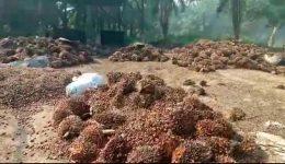 Biya Regime Ekondo Titi Attacks: Southern Cameroons socioeconomic crisis now at breaking point