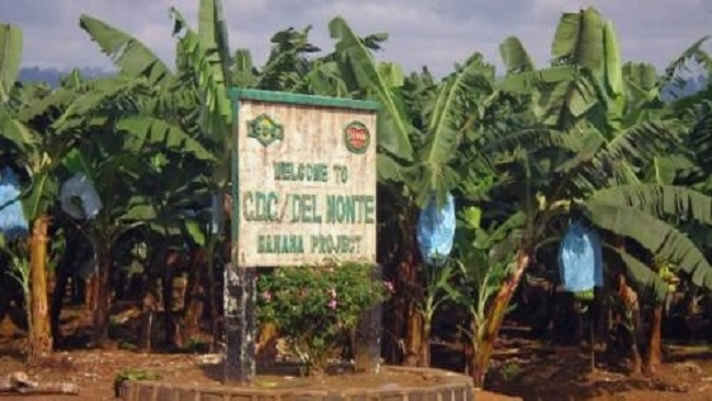Southern Cameroons Crisis: Abandoned CDC-Delmonte workers are stalked by hunger, death